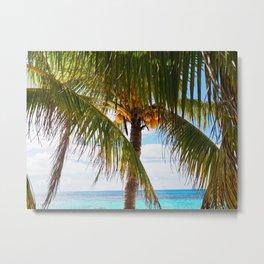 Fresh Palm Trees Metal Print