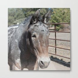 Oki's sweet Mule face Metal Print