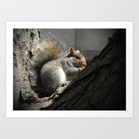 squirrel Art Prints featuring Squirrel by Mandy Becker