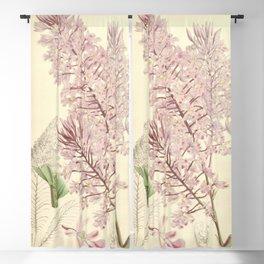 Epidendrum myrianthum Curtis' 92 (Ser. 3 no. 22) pl. 5556 (1866) Blackout Curtain