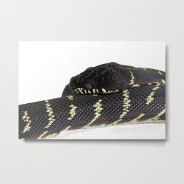 Boelen's Python, Draven. Metal Print