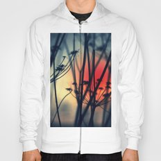 Shapes - dry weeds at sunrise Hoody