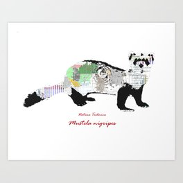 Natura Technica - Black Footed Ferret Art Print