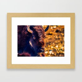 Thousand Mile Stare - Saturated Framed Art Print