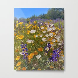 Arizona Wildflowers V Metal Print