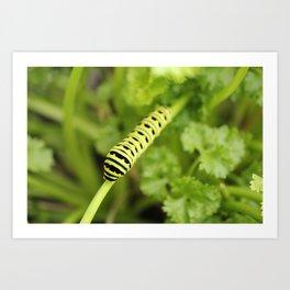 Parsley Caterpillar Art Print