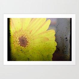 Yellow Gerber Art Print