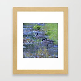 Geese in the Reeds Framed Art Print