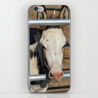 donkey iPhone & iPod Skins featuring Donkey by Heather Boyce