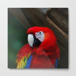 Scarlet Macaw Bird Metal Print
