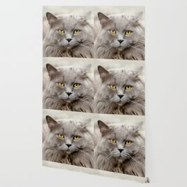 Funny Angry Cat Wallpaper