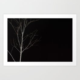 Tree in dark Art Print