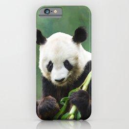 Painting Panda Bear Long Hui iPhone Case