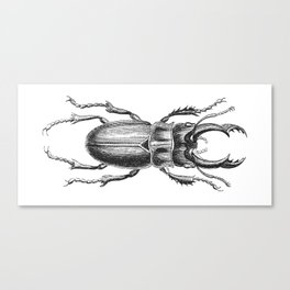 Vintage Beetle black and white Canvas Print