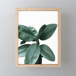 Rubber fig Plant Framed Mini Art Print