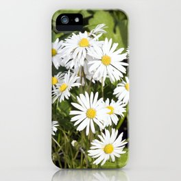 COMMON DAISY  iPhone Case