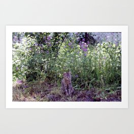 Flowery cat Art Print