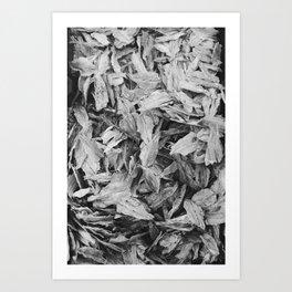Salted Art Print