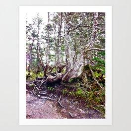 Alaskan Trees Art Print