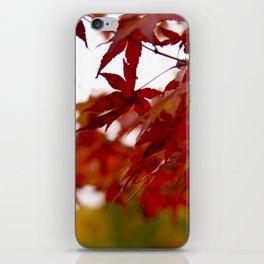 Fall Foliage iPhone Skin