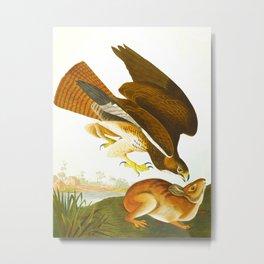 Common buzzard John James Audubon Vintage Scientific Bird Illustration Metal Print