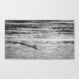 A Great Blue Heron Flying Over Cool Water Ripples Canvas Print