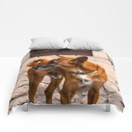 The Orange Dog Comforters