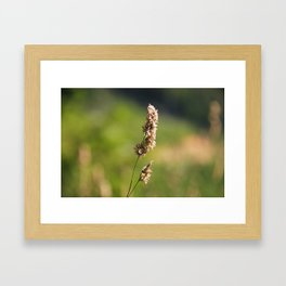 Mountain Grass Framed Art Print