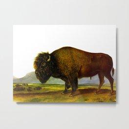 Bison, or Buffalo Vintage Scientific Animal Illustration Metal Print