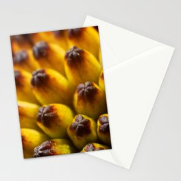 Extreme close up of center of African Daisy Stationery Cards
