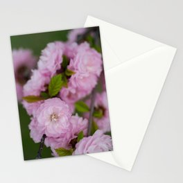 Flowering Almond 3 Stationery Cards