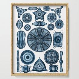 Ernst Haeckel Diatomea Diatoms in Navy Blue Serving Tray