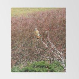 Sparrowhawk (Kestrel) 3 Throw Blanket