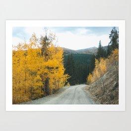 Yellow Leaf Road - Colorado Aspen Art Print