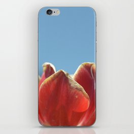 Red and yellow tulips iPhone Skin