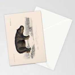 Vintage Hippopotamus Stationery Cards
