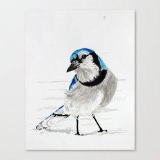 Blue Jay (Cyanocitta cristata) Canvas Print