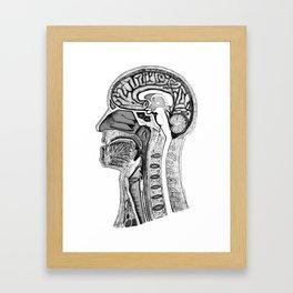 Head-anatomy (realistic) Framed Art Print