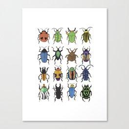 Beetle Species Canvas Print