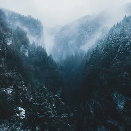 Notebook - Foggy Forest Mountain Valley - Landscape Photography - regnumsaturni