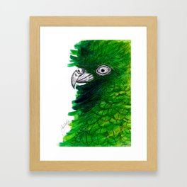 New Zealand Cheeky Kea Framed Art Print