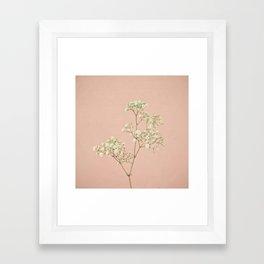 Baby's Breath Framed Art Print