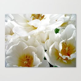 White tulips with afterglow centers Canvas Print
