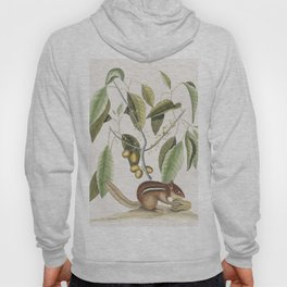 Ground Squirrel (Sciurus) from The natural history of Carolina Florida and the Bahama Islands (1754) Hoody