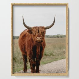 Highland Cow in nature | Scottish Highlanders, cattle in the Netherlands | Wild animals | Fine art travel and nature photography art print Serving Tray