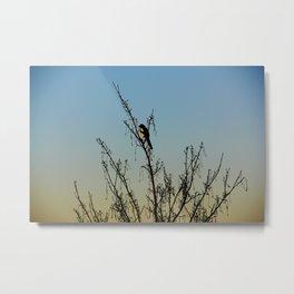 Evening song bird at sunset Metal Print