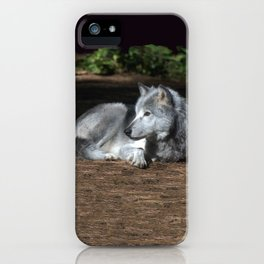 Gray Wolf at Rest iPhone Case