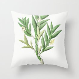 Meadow squill from Edwardss Botanical Register (1829-1847) by Sydenham Edwards John Lindley and Jame Throw Pillow