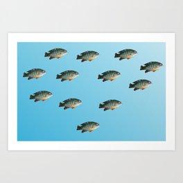 Green Sunfish Art Print