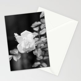 Urban White Rose Stationery Cards
